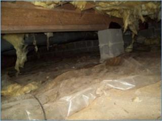 Wet Crawlspace