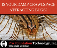 Millipede bug with text Is Your Damp Crawlspace Attracting Bugs?